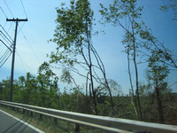 Tree damage along Route 20