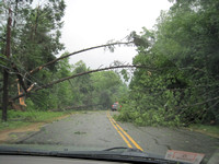 Trees down on Holland Road